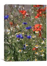 Cornflower Poppy Daisy, Canvas Print