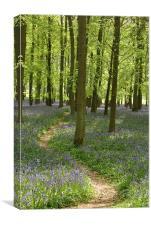Bluebell Path, Canvas Print