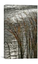 Autumn Reeds, Canvas Print