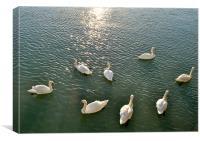 Swans at Littlehampton, Canvas Print