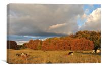 Autumn in Tring Park, Canvas Print