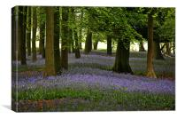 Bluebell Time, Canvas Print