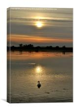Swan at Sunset, Canvas Print