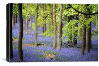 bluebells at ashridge, Canvas Print