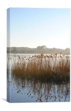Reedbeds on Marsworth Reservoir, Canvas Print