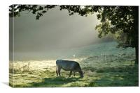 In a Misty Dawn 1, Canvas Print