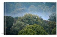 morning mist, Canvas Print