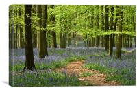 Through the Bluebell Wood, Canvas Print