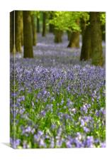 Ashridge Bluebells, Dockey Wood, Canvas Print