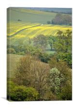 Spring in the Chilterns, Canvas Print