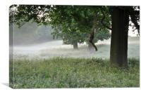 Three Trees in the Dawn Mist, Canvas Print