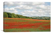 Poppy Field in the Chilterns, Canvas Print