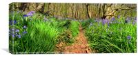 Bluebells on the trail., Canvas Print