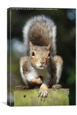 Portrait of a Cute Squirrel, Canvas Print