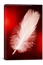 White Feather, Canvas Print