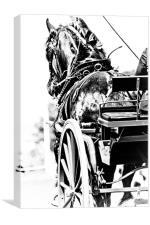 Black & White Horse & Carriage, Canvas Print