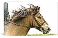 Exmoor Pony 2, Canvas Print