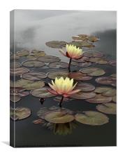 Yellow Water Lily, Canvas Print