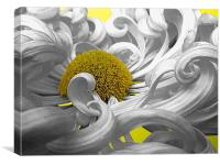Curly Chrysanthemum In White, Canvas Print