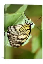 Life is like a butterfly, Canvas Print