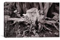 Tree Spider, Canvas Print