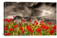 Tulips Galore, Canvas Print