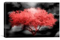 Autumn Red, Canvas Print