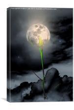Moon Flower, Canvas Print