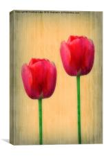 Spring Tulips, Canvas Print