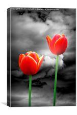 Night Tulips, Canvas Print