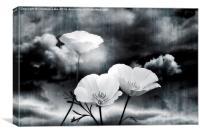 Wild Beauty, Canvas Print
