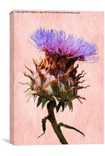 Thistle , Canvas Print
