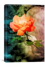 Rose With A View , Canvas Print