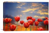 Tulip Sunset, Canvas Print