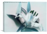 Lily Blues, Canvas Print