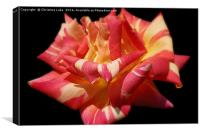 Raspberry Ripple, Canvas Print