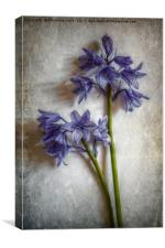 Bluebell Delight, Canvas Print