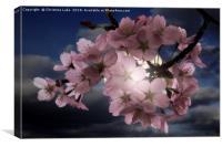 Blossom In Moonlight, Canvas Print