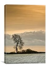 Winter Tree, Canvas Print