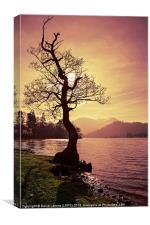 Lakeside Tree, Canvas Print