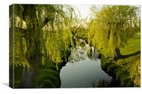 Weeping Willows Richmond Park., Canvas Print