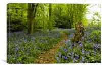 Spring bluebells in Staffhurst Woods