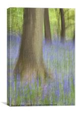 Bluebell Wood, Norfolk, Canvas Print