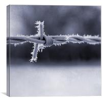 Frosted Barbed Wire, Canvas Print