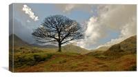 Hardknott Tree, Canvas Print