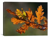 Autumn Oak Leaves, Canvas Print