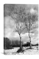 Winter Trees - Mono, Canvas Print