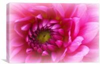 Pink dahlia macro, Canvas Print