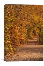 Autumnal Tunnel, Canvas Print