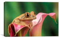 Frog on lily , Canvas Print
